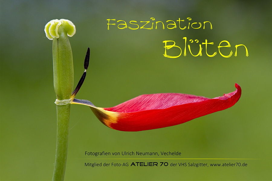 Ausstellungsplakat Faszination-Blueten