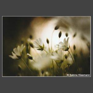 Platz 5 Kleemann, Sabine - in der Blumenwiese