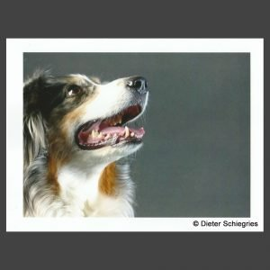 Platz 5 Schiegries, Dieter - Lou