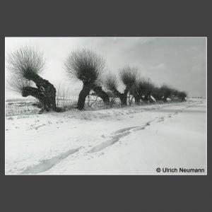 Platz 4 Neumann, Ulrich - Kopfweiden