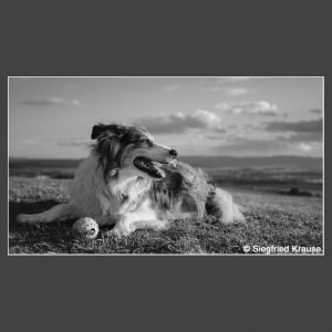 Platz 5 Krause, Siegfried - Australian Shepherd
